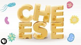 Cheesy Science
