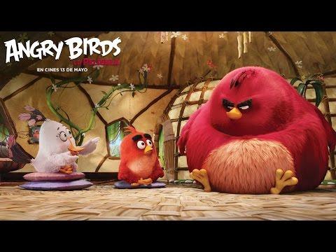 ANGRY BIRDS LA PELÍCULA.  Buena conversación. En cines 13 de mayo