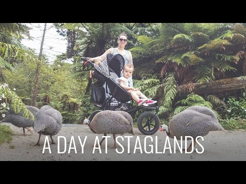 You'll Never Believe What We Saw At Staglands!
