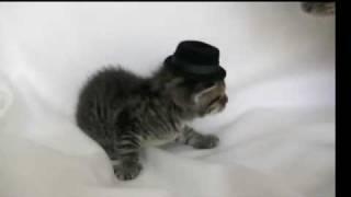 Kitten Wearing a Tiny Hat Gets Hadokened.