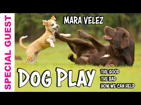 Learn about Dog Play from Expert Mara Velez