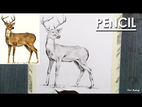 How to shade a Deer in Pencil