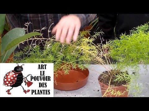 Plantes grasses aloe gymnocalycium espostoa cereus - Entretien aloe vera interieur ...