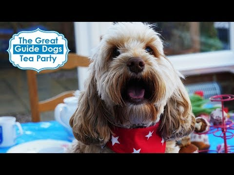 Great Guide Dogs Tea Party