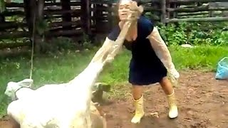 Ozzy Man Reviews: When Animals Fight Back #2