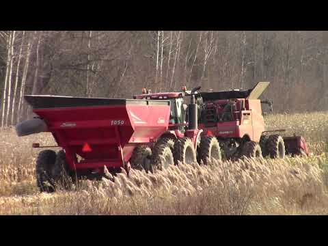 Corn Harvest at Ridge View 11-7-20