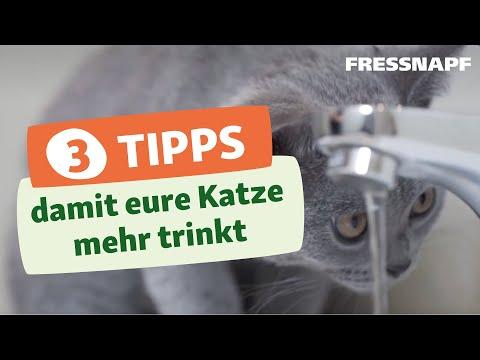3 Tipps damit eure Katze mehr trinkt - Trinkbrunnen