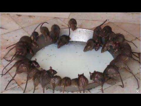 El remedio infalible para ahuyentar r pido a las hormigas - Como acabar con los ratones en casa ...