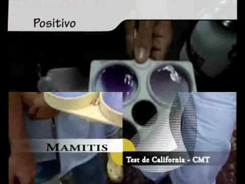 CMT - kalifornija mastitis test