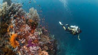 Raja Ampat: Misool diving