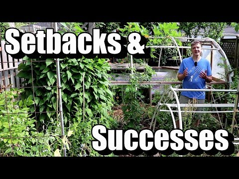 The Slowest Start to Our Summer Garden Ever: Setbacks and Successes