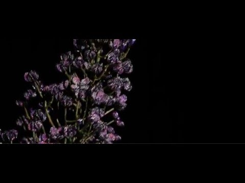 The Jeweled Garden - Lilac