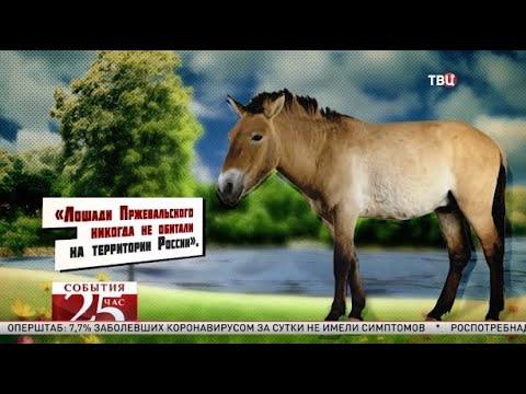 Интернет пользователи заступились за «исчезнувших» лошадей Пржевальского. Великий перепост