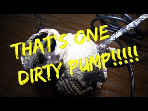 How to clean a nasty wave maker pump by D&D Ezclean