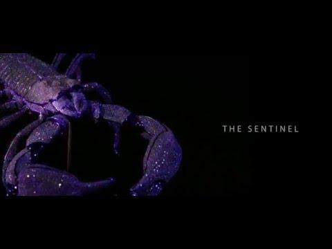 The Jeweled Garden - Scorpion