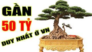 Chiêm ngưỡng Vườn Cây Di Sản không tính bằng tiền của anh Toàn Đô La