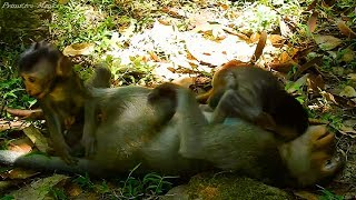Funny Baby Monkeys Playful Together, They're So Happy Animals Life!