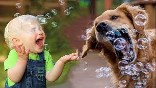 TRY NOT TO LAUGH: Babies and Dog playing with BUBBLES   Funny Pets
