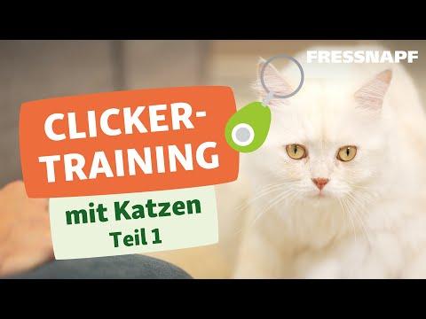 Clickertraining mit Katzen Teil 1/2