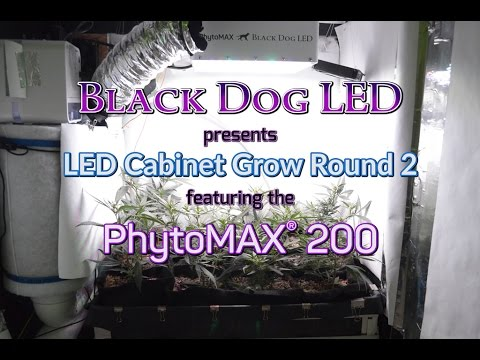 Black Dog LED PhytoMAX 200 Super Lemon Haze Flowering