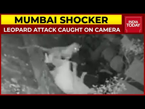 Leopard attacks 55-year-old woman in Mumbai, CCTV footage