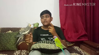 How to Tame your Bird (HINDI)