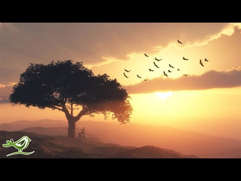 Beautiful Romantic Music: Relaxing Music, Guitar Music, Violin Music, Cello Music, Piano Music ★103
