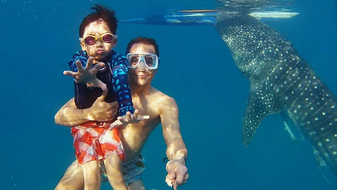 Nage avec les requins baleine aux Philippines