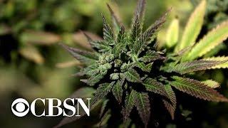 Trump administration tells agencies to promote negative impact of marijuana use