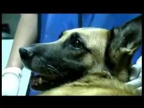 Mokraćni kamenci kod psa