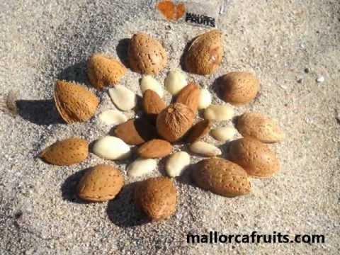 Mallorca Fruits 2012. Palmanova Mallorcan Almond