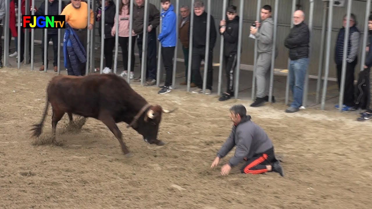 Encierro y vacas Jaime Tárrega Lucas - Benicassim 25-01-2020 (Castellon) Bous Al Carrer