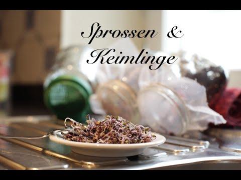 Viriditas Heilpflanzen-Video: Sprossen & Keimlinge