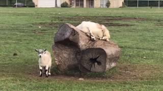 FUNNY PET FAILS | FUNNY ANIMALS