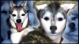 I Transformed Myself Into My Dog, Ripley