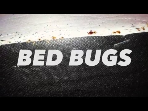Action Pest Control Treats for Bed Bugs