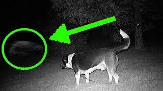 10 Cảnh Quay Lạnh Người Chứng Minh Chó Gặp Ma!