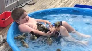 Best Of 2015 Cute Funny Animals