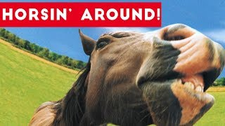 Top Funniest Horse Videos of 2017 Weekly Compilation | Funny Pet Videos