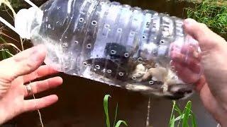 Bẫy Cá Tự Chế Bằng Chai Nhựa Cực Đơn Giản và Hiệu Quả || Kĩ Năng Sinh Tồn