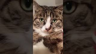 Cats are so funny you will die laughing 695