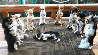 Cute is Not Enough - Funny Cats and Dogs Compilation #237