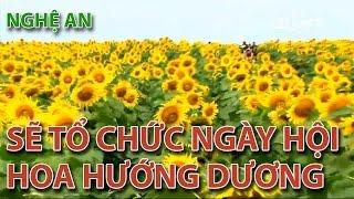 (VTC14)_Nghệ An sẽ tổ chức ngày hội hoa hướng dương