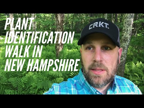 Plant ID Walk in New Hampshire - Virginia Creeper, Jewelweed, Stinging Nettle, and More