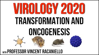 virology-lectures-2020-18-transformation-and-oncogenesis.jpg