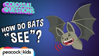 How Do Bats 'See' if They're Blind? | COLOSSAL QUESTIONS