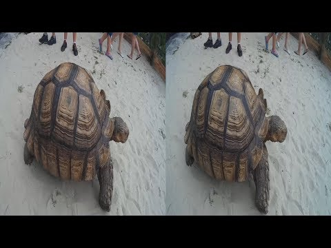 Turtles 3D ! A giant TURTLE ! 3D VIDEO