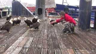 amazing eagles in dutch harbor