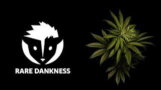 Rare Dankness & House of Dankness Cannabis - Scott Reach (S1E6: Canna Cribs, Denver, CO)