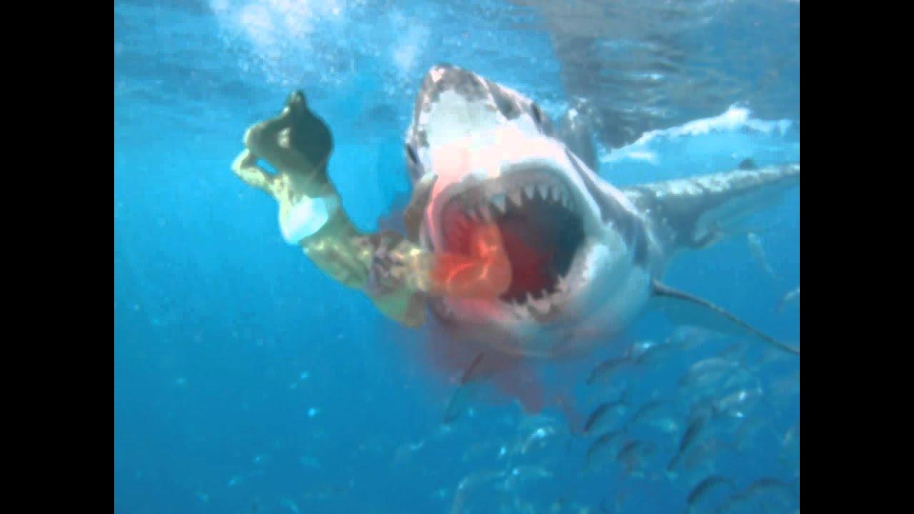 Great White Shark Attack - YouTube